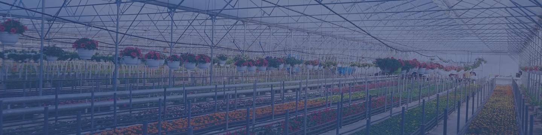 növényház kép